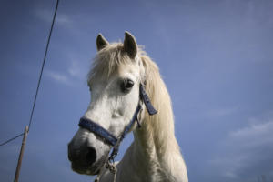 Βόλος: Άλογο έτρεχε στο αντίθετο ρεύμα – Πανικός στην Εθνική