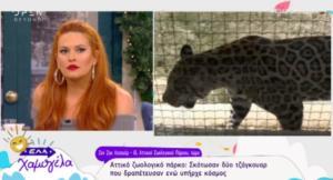 Έτσι δραπέτευσαν τα τζάγκουαρ από το Αττικό Ζωολογικό Πάρκο!