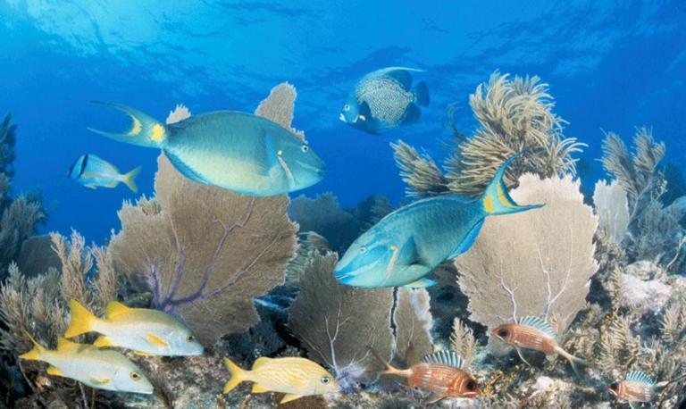 Ξαναγεννιέται ο Μεγάλος Κοραλλιογενής Ύφαλος, Παγκόσμιο Μνημείο της UNESCO!