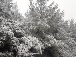 Καιρός: «Νυφούλα» στα λευκά η Λέσβος! Χιόνι σε πολλές περιοχές του νησιού- Video