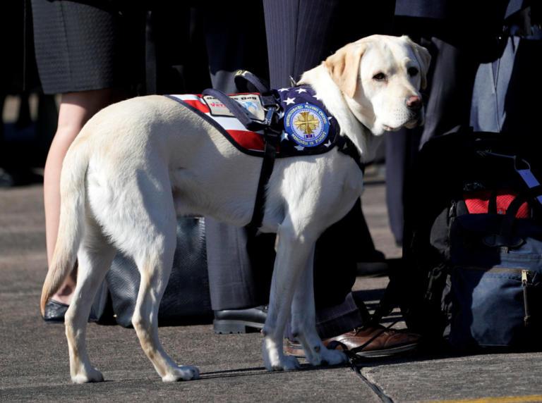 Μαζί με τον Τζορτζ Μπους μέχρι το τέλος ο πιστός σκύλος του   Newsit.gr