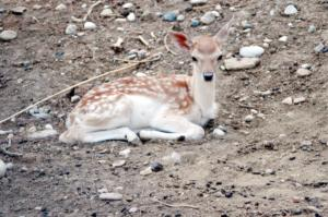 «Ξεσαλώνουν» οι λαθροκυνηγοί στα σύνορα – Δεκάδες παράνομες θηλιές για ζαρκάδια