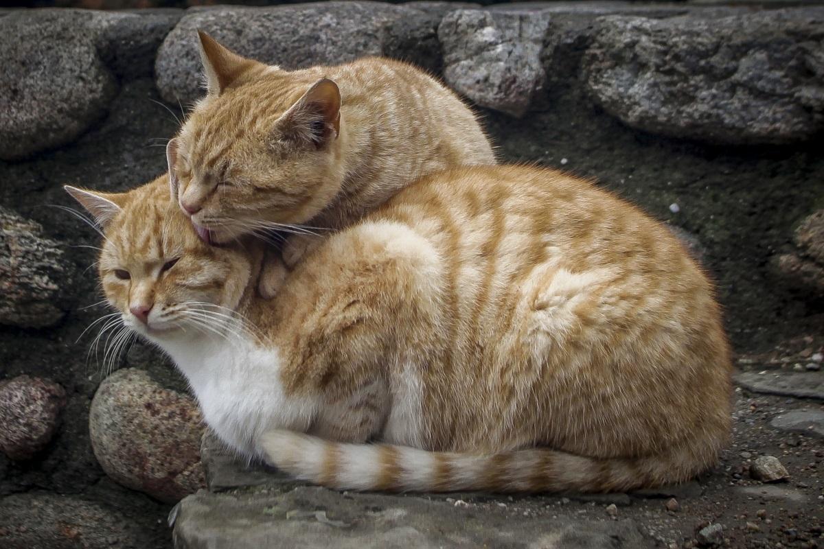 Αγκαλιές και χάδια στα Μετέωρα για να αντέξουν την παγωνιά! | Newsit.gr