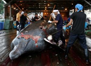 Προκλητική Ιαπωνία! Αποσύρεται από τη Διεθνή Επιτροπή Φαλαινοθηρίας!