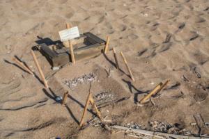 Ζάκυνθος: Αριθμός ρεκόρ για τις φωλιές της καρέτα καρέτα!