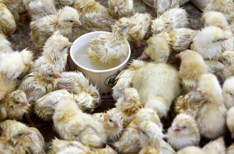Δημοσίευση σοκ: Ζούμε στην εποχή του κοτόπουλου – Αυτά είναι τα πιο εμβληματικά ζωικά απολιθώματα | Newsit.gr
