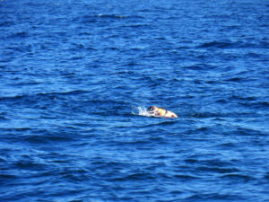 Σκάφος με μετανάστες στα Κύθηρα – Συλλήψεις διακινητών