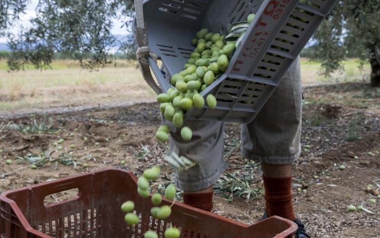 ΟΠΕΚΕΠΕ: Xoρήγηση δικαιωμάτων βασικής ενίσχυσης 2018 | Newsit.gr