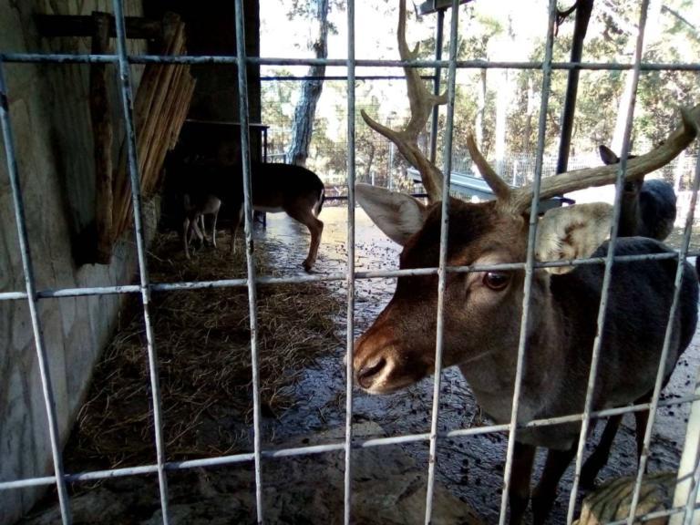 Θεσσαλονίκη: Μπήκαν στον ζωολογικό κήπο και διάβασαν αυτές τις λέξεις – Η έκπληξη μικρών και μεγάλων [pics] | Newsit.gr