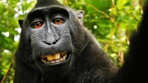 Σεξ με μαϊμού βίντεο