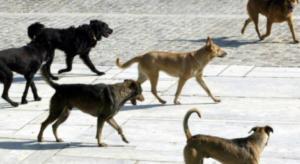 Βγήκε βόλτα και του επιτέθηκαν…20 αδέσποτα σκυλιά!