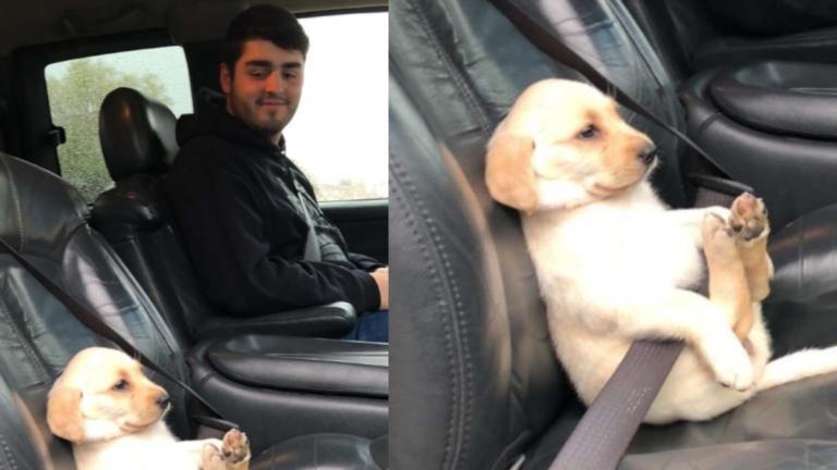 """Ανέβασε αυτή τη φωτογραφία με έναν σκύλο, και """"γονάτισε"""" το ίντερνετ   Newsit.gr"""