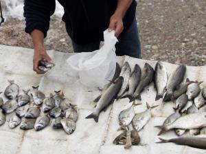 Έλεος! Ελεγκτές κυνήγαγαν ηλικιωμένο ψαρά για τα 4 λεπτά στην πλαστική σακούλα!