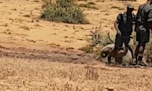 Έσωσαν μωρό ελέφαντα από χαντάκι [vid]