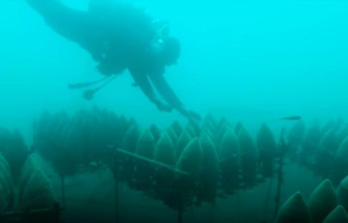 Κάβα βρίσκεται στο βυθό της θάλασσας – Ο απίστευτος λόγος που έχουν εκεί τα κρασιά