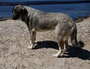 Κρήτη: Αναζητούν τον άνδρα που πυροβόλησε και σκότωσε σκύλο
