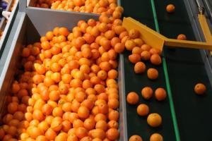 Πειραιάς: Κατασχέθηκαν πάνω από 10 τόνοι φρούτα