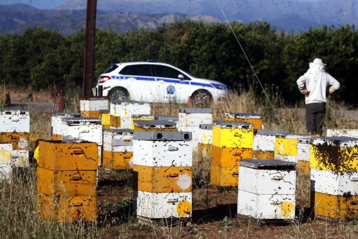 Ηράκλειο: Του έκλεψαν μέλισσες και κυψέλες!