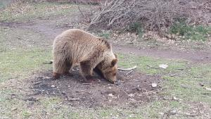 Πουλούσαν αρκουδάκι στο internet! Η συγκινητική ιστορία και η σωτηρία του Ρέι [pic]