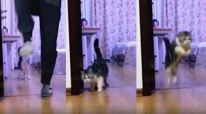 Το viral βίντεο με τις εκατομμύρια προβολές – Πώς ξεγέλασε μια γάτα