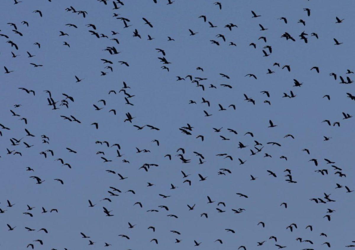 Ανησυχία στη Γαλλία για το φαινόμενο εξαφάνισης πουλιών στην επαρχία