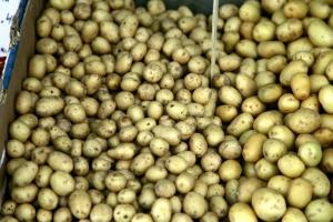SOS από τους παραγωγούς πατάτας στο Κάτω Νευροκόπι