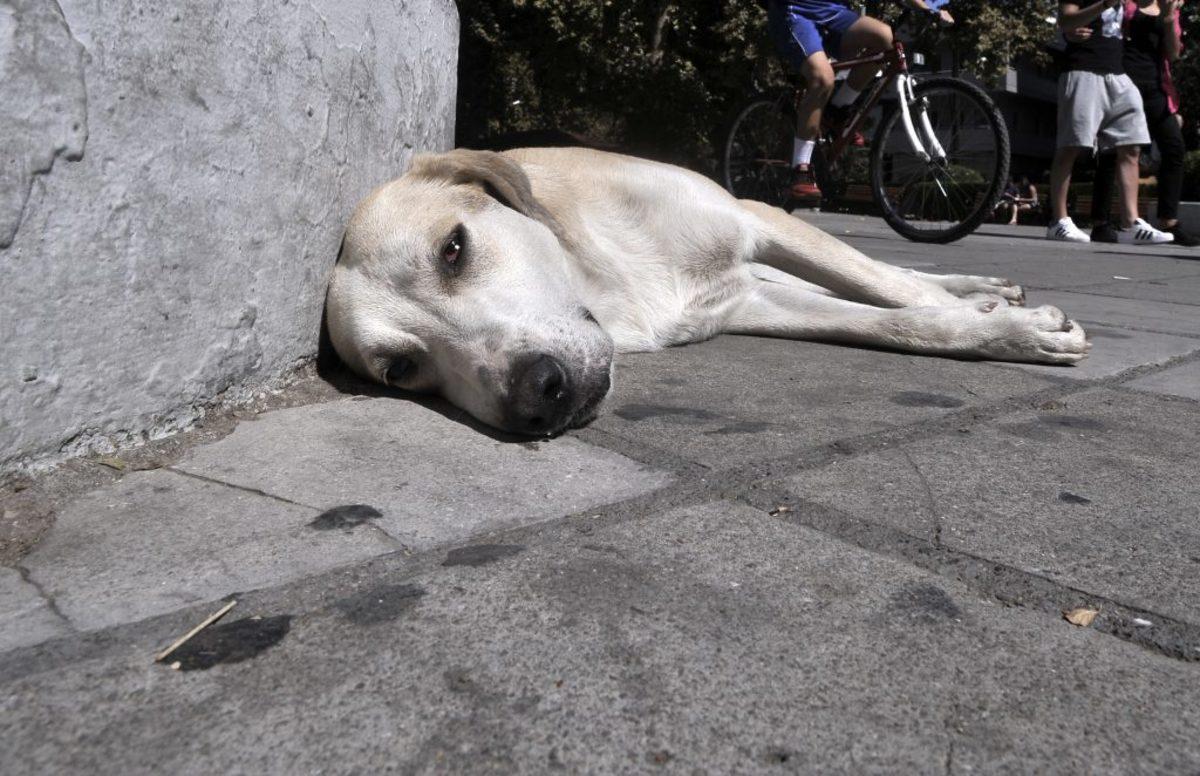 νομοσχεδιο ζώα συντροφιάς αποσύρθηκε