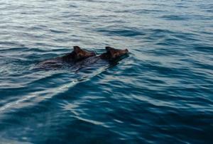 Ηλεία: Οι ψαράδες κοίταξαν στη θάλασσα και είδαν αυτές τις εικόνες που θα θυμούνται για πάντα – «Νομίζαμε ότι ονειρευόμαστε» [pic, vid]