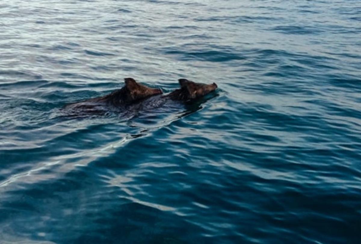 """Ηλεία: Οι ψαράδες κοίταξαν στη θάλασσα και είδαν αυτές τις εικόνες που θα θυμούνται για πάντα – """"Νομίζαμε ότι ονειρευόμαστε"""" [pic, vid]"""