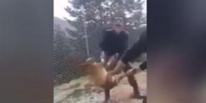"""Συγκλονισμένη η Κόνιτσα με τον βασανισμό σκύλου από φαντάρους! """"Είναι πολύ στενοχωρημένο το παιδί μου"""""""