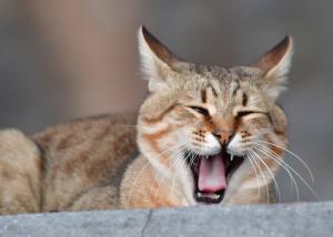 Γερμανία: Τίναξε στον αέρα αρπακτικά πουλιά γιατί του σκότωσαν τις γάτες