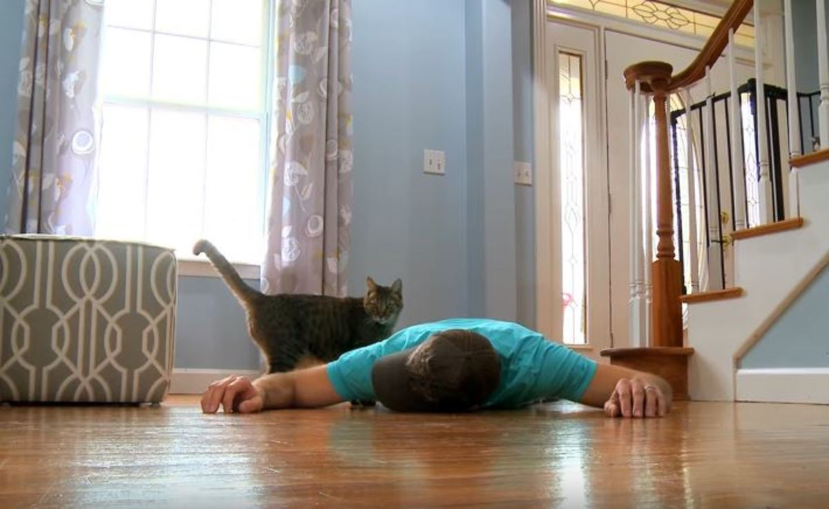 Προσποιήθηκε ότι πέθανε μπροστά στην γάτα του – Η αντίδρασή της είναι ανεκτίμητη