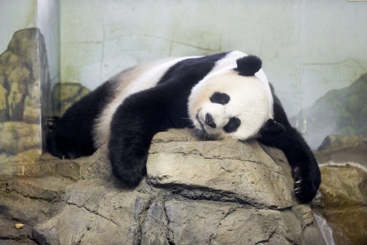 Γιατί είναι καταστροφικό να κοιμόμαστε 4 ώρες ακόμα και αν δεν νιώθουμε κουρασμένοι