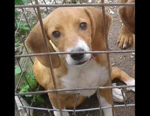 Κυνηγός υποστηρίζει ότι το σκυλάκι που βασάνιζαν οι φαντάροι είναι ο σκύλος του!