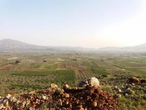 Κορινθία: Φύτεψαν 400 δέντρα και τα έφαγαν γίδια – Απίθανα πράγματα στον Άγιο Βασίλειο [pics, vid]