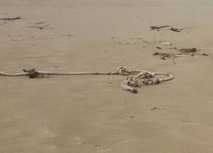 Κρήτη: Μετά τα πρώτα τους βήματα στην παραλία έπεσαν πάνω σε αυτές τις εικόνες – Οι φωτογραφίες στην αμμουδιά [pics]