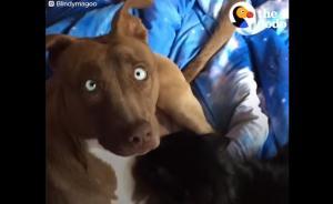 Κανείς δεν ήθελε αυτόν τον σκύλο μέχρι που βρήκε το αφεντικό που τον θεωρεί αξιολάτρευτο!
