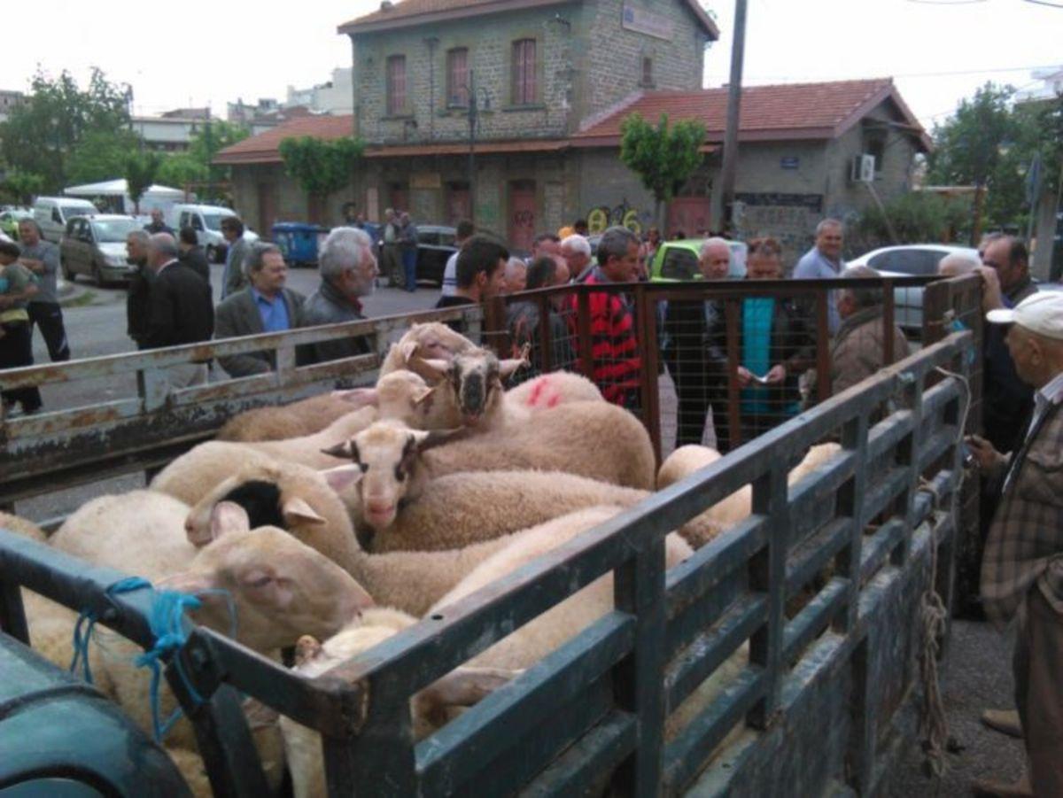 Ματαίωση της ζωοπανήγυρης στο Αγρίνιο λόγω βασανισμού των ζώων