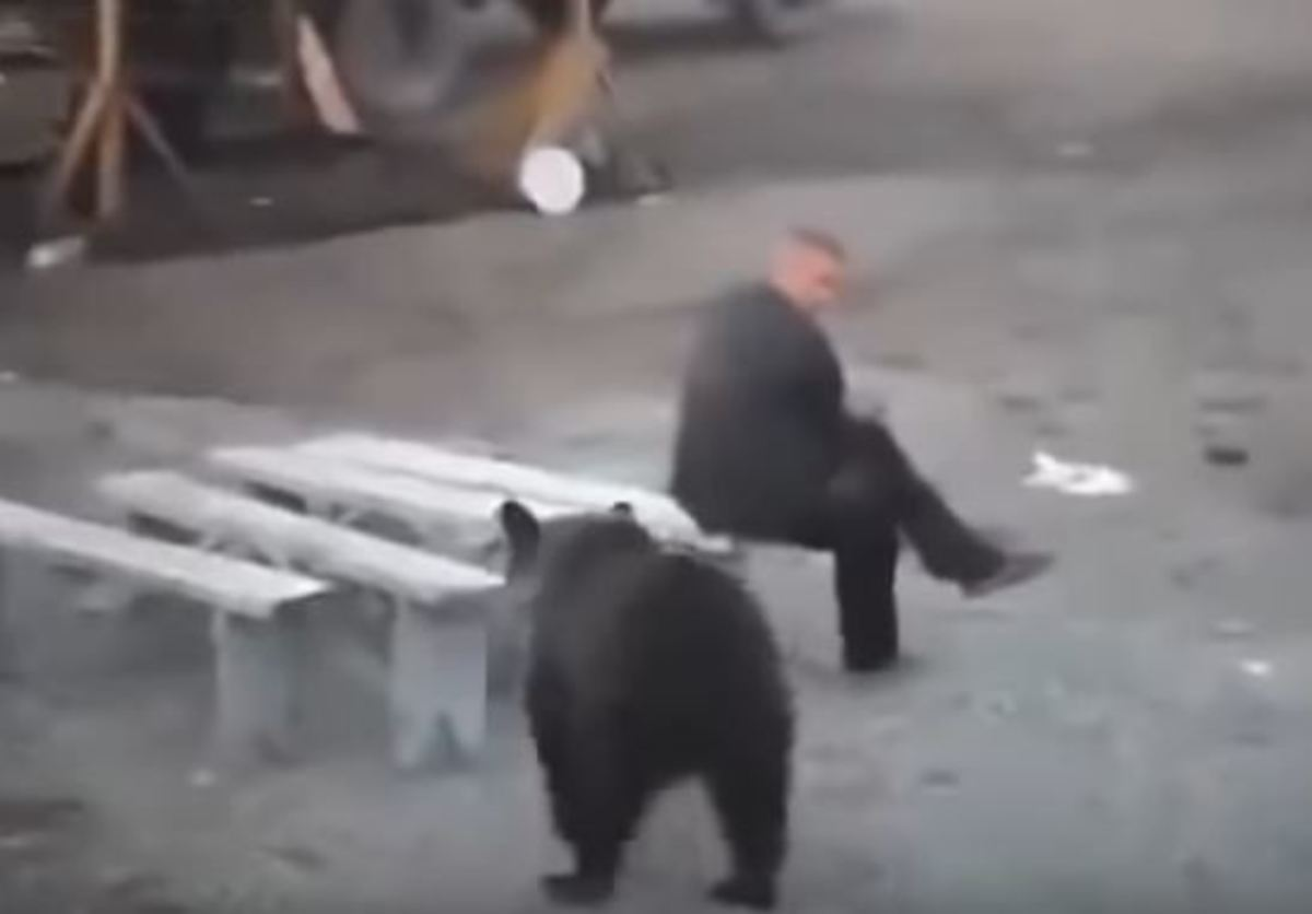 Αρκούδα πλησιάζει απειλητικά άνδρα και εκείνος… χαμπάρι!