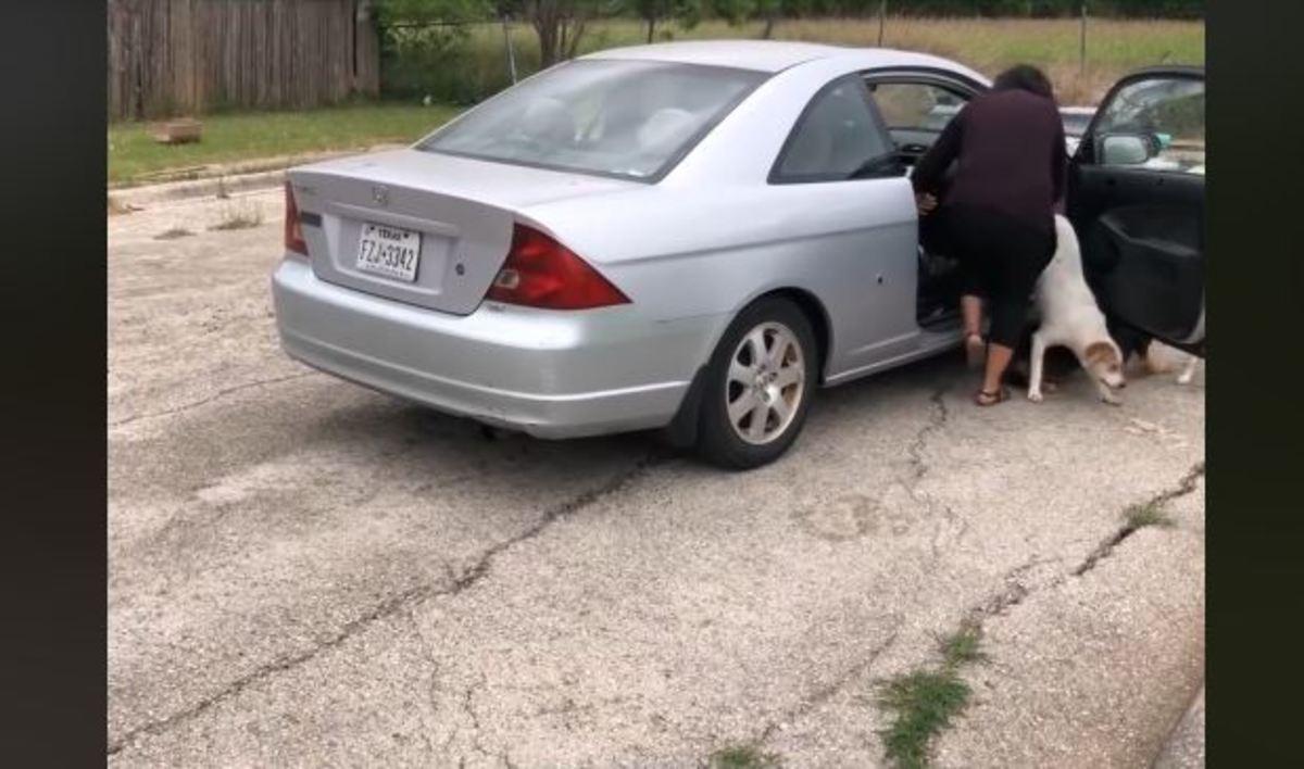 Παράτησε τα 4 σκυλιά της στο δρόμο και έφυγε