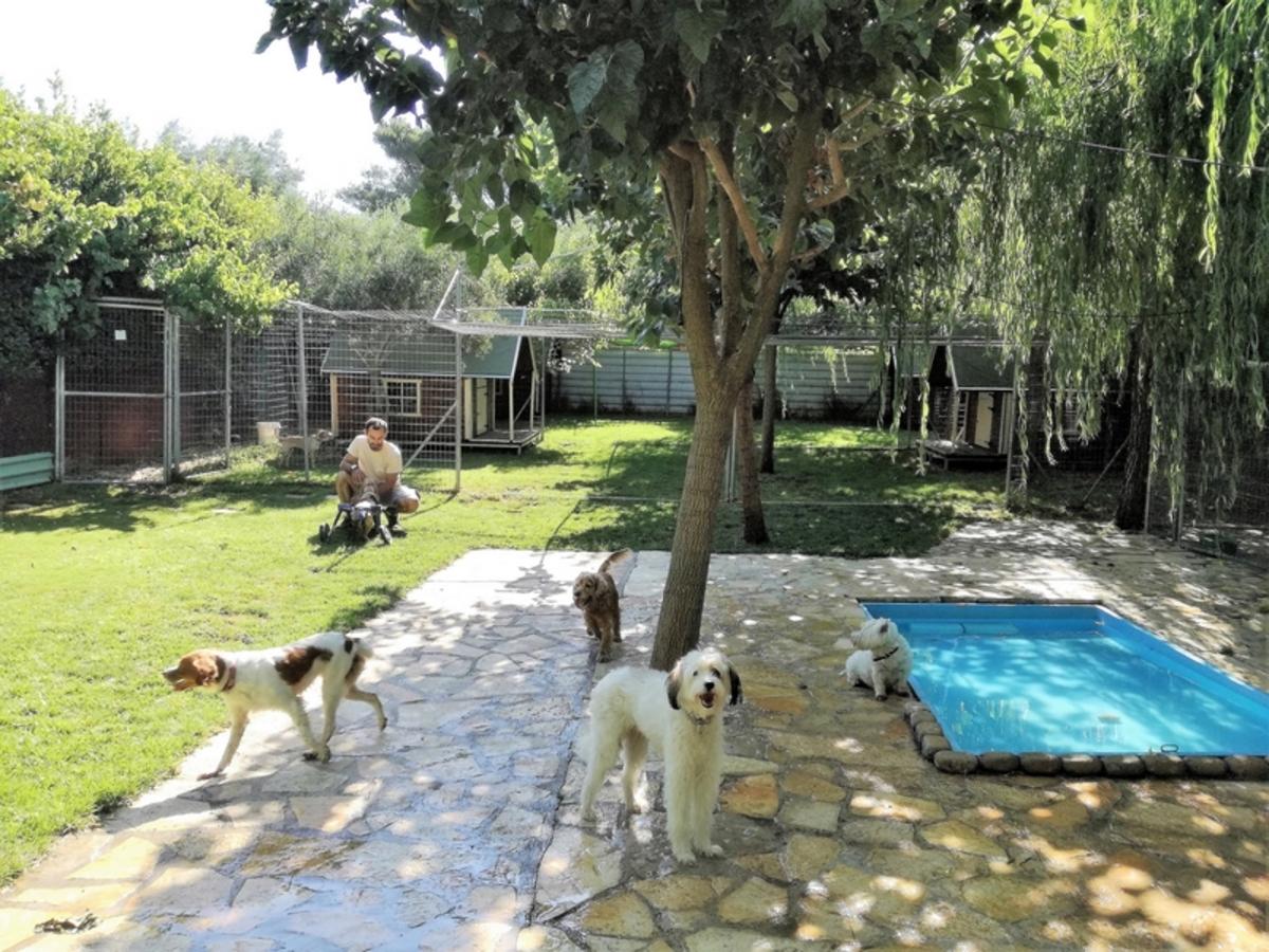 «I LOVE DOGS», ένα πεντάστερο πρότυπο ξενοδοχείο σκύλων στα βόρεια προάστια