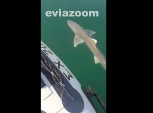 Καρχαρίας στη Χαλκίδα! [vid]