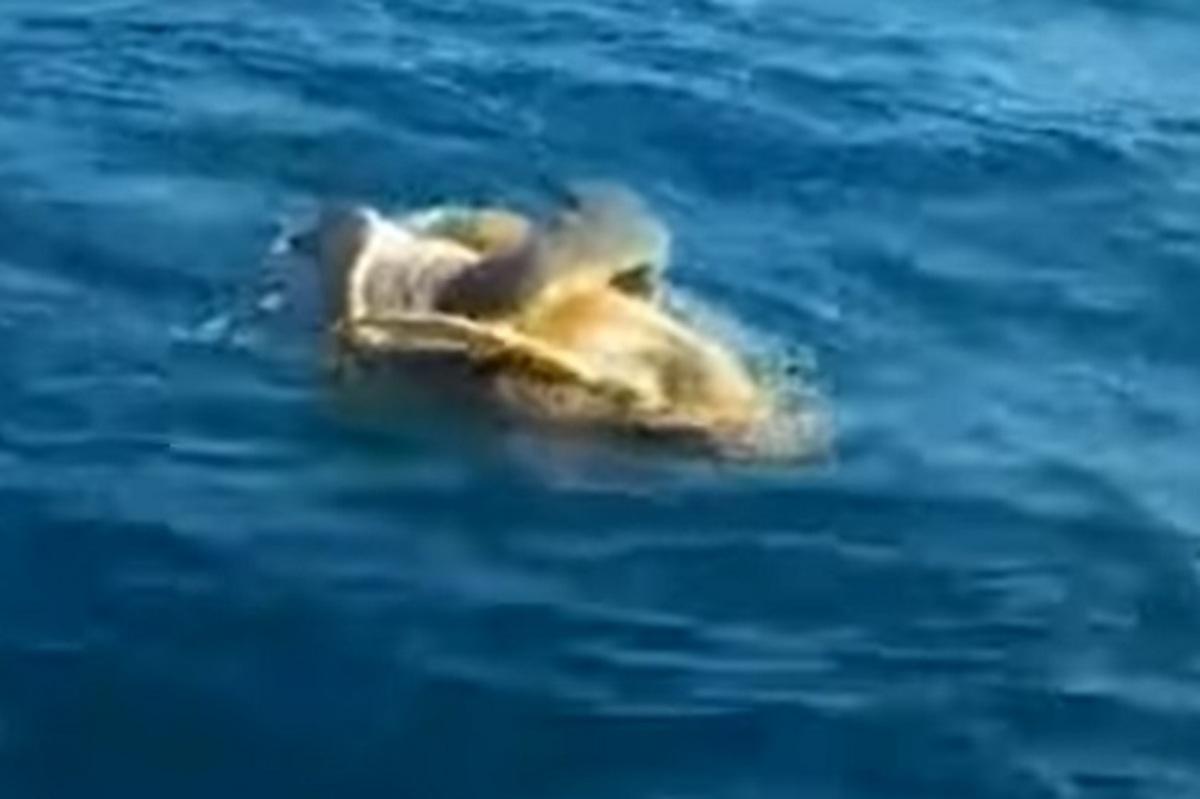 Αργολίδα: Η εικόνα στη θάλασσα τους κίνησε την περιέργεια και αποφάσισαν να πλησιάσουν με το σκάφος τους [vid]