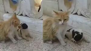 Γάτα άκουσε κουτάβι να κλαίει – Έγινε η μητέρα του!