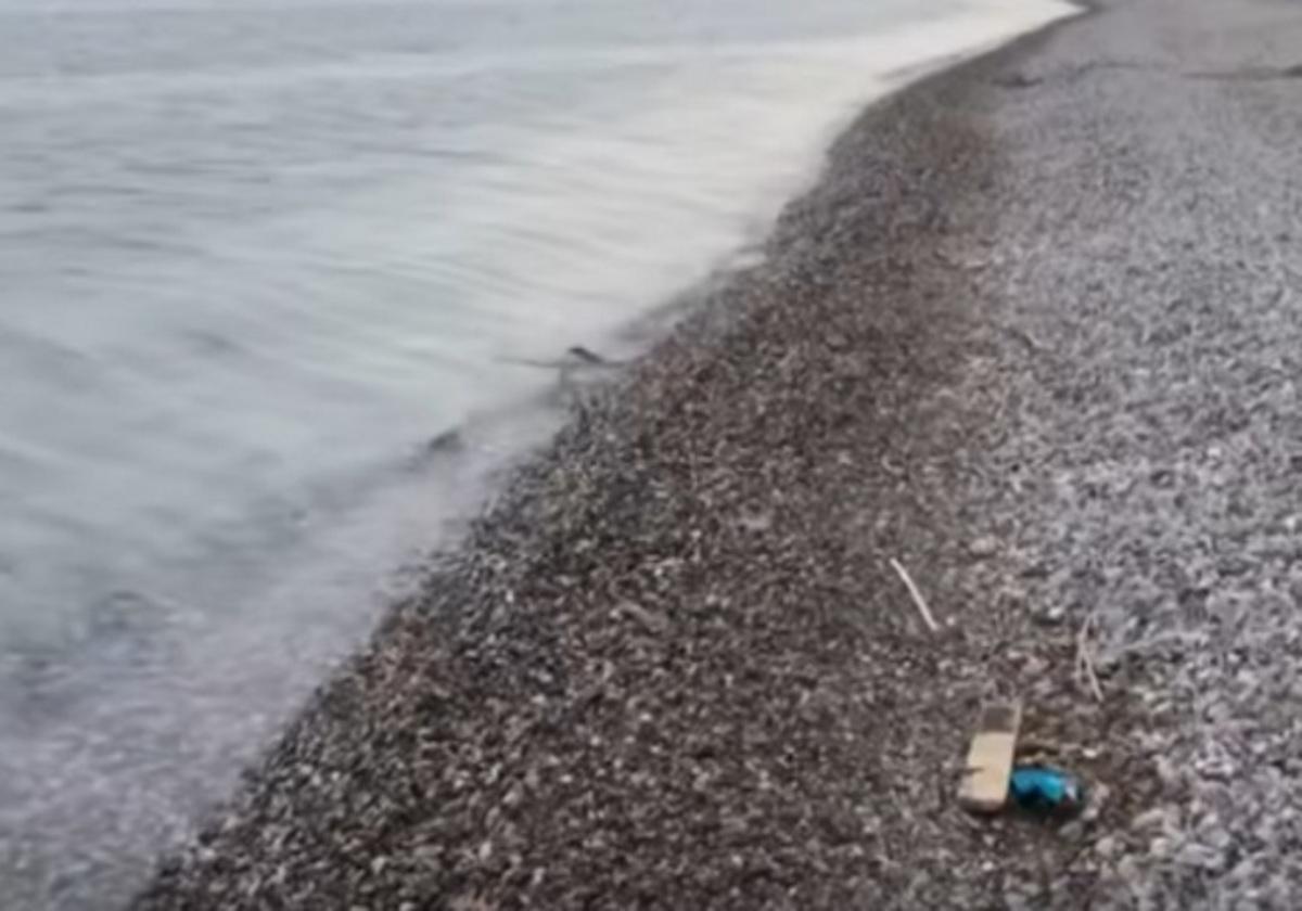 Ναύπακτος: Έμεινε σταθερό το βλέμμα του στην παραλία και προσπαθούσε να πιστέψει στα μάτια του [vid]