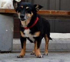 Πάτρα: Η θλιμμένη σκυλίτσα και η άγνωστη ιστορία της που προκαλεί συγκίνηση – Οι στιγμές που θα μείνουν αξέχαστες [pics]