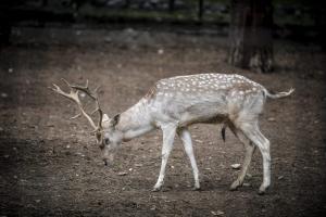 Ζωολογικό Κήπο σχεδιάζει η Περιφέρεια Κεντρικής Μακεδονίας