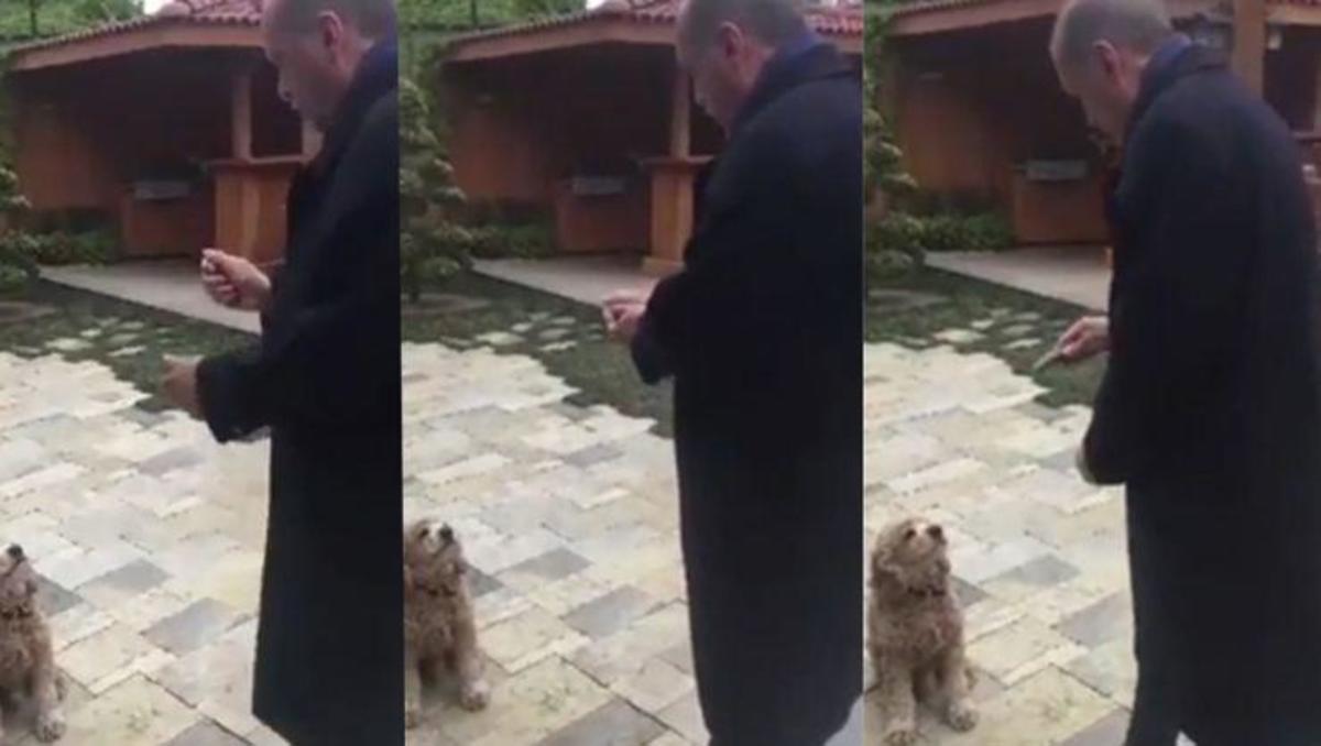 Ερντογάν αγγούρι σκύλος video viral