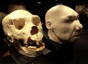 Τα αρχαιότερα ανθρώπινα απολιθώματα στην Ευρώπη – Κανίβαλος o άμεσος πρόγονός μας