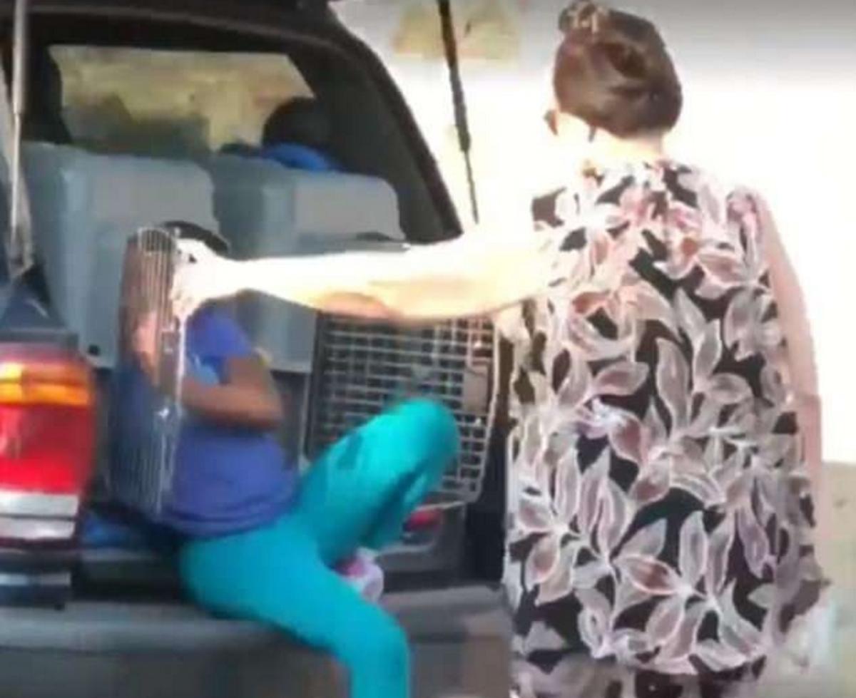 Σοκαριστικές εικόνες! Μετέφερε τα εγγόνια της σε κλουβιά σκύλων